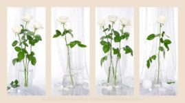 четыре натюрморта белые розы