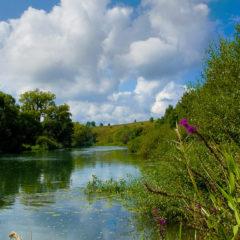 река, высокая трава, облака