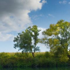 река, деревья, облака, небо, пейзаж