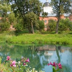 пруд, деревья, полевые цветы, лето