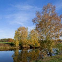 береза, озеро, осень