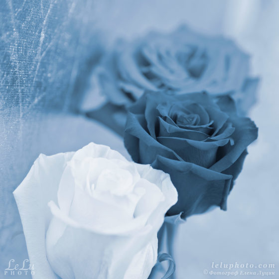 стилизованное фото с тремя розами для интерьера