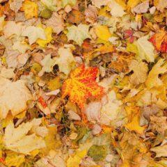 осенние листья, осень