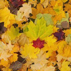 осень, разноцветная листва