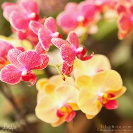 орхидеи в тропическом лесу