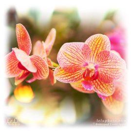Фото с орхидеями для печати на ткани