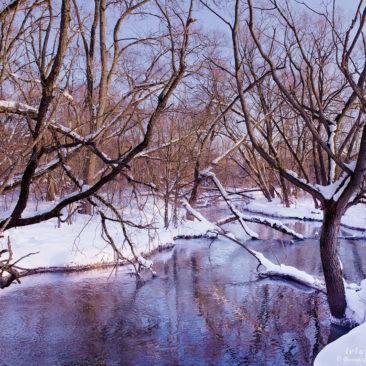 деревья и река в лесу, сиреневая зима