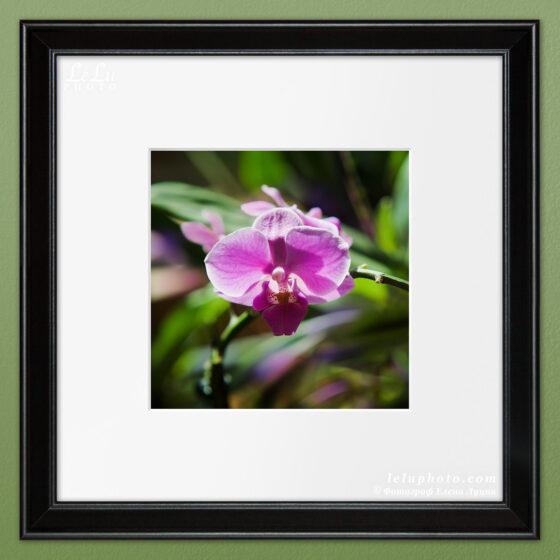 фотокартина с орхидеей