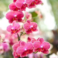 цветы орхидеи ветка