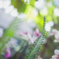 веточка пальмы и орхидеи