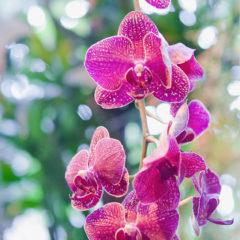 ветка цветов орхидеи