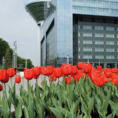 здание Дома Правительства Московской области, тюльпаны