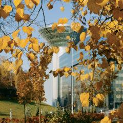 осень, листья, здание Дома Правительства Московской области