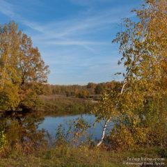 береза, водоем, осень