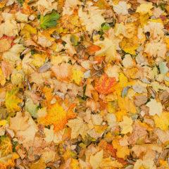 осенние листья, краски осени