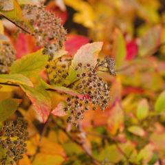 осень, кустарник