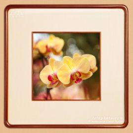 фотокартина с желтыми орхидеями