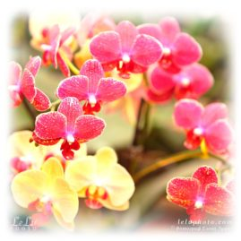 Фото с орхидеями для печати на подушке