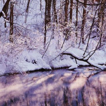 сиреневая зима, деревья и река