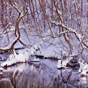 сиреневая зима, деревья над рекой