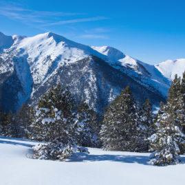 зимний горный пейзаж, ели