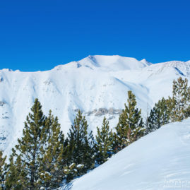 вершины гор и ели зимой