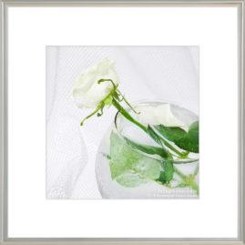 белая роза в декоративном бокале