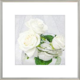 белые розы в воде