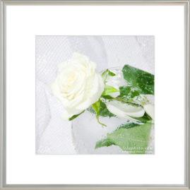 белая роза в бокале с водой