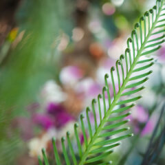 веточка пальмы