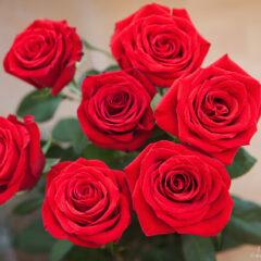 семь алых роз