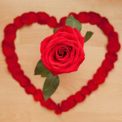 алая роза и сердце из лепестков